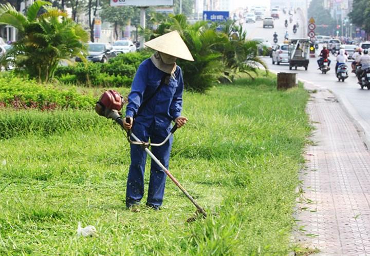Máy cắt cỏ Oshima VX 411